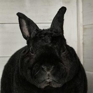 Ghibli! Het liefste konijn, ooit